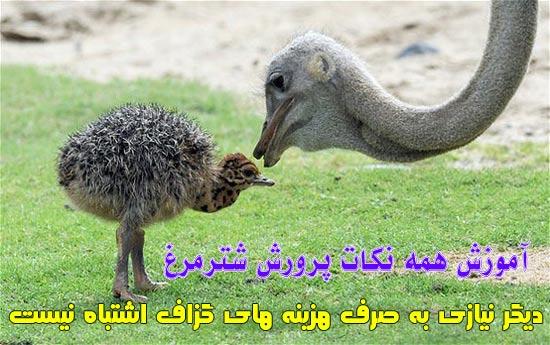 ostrich (5)
