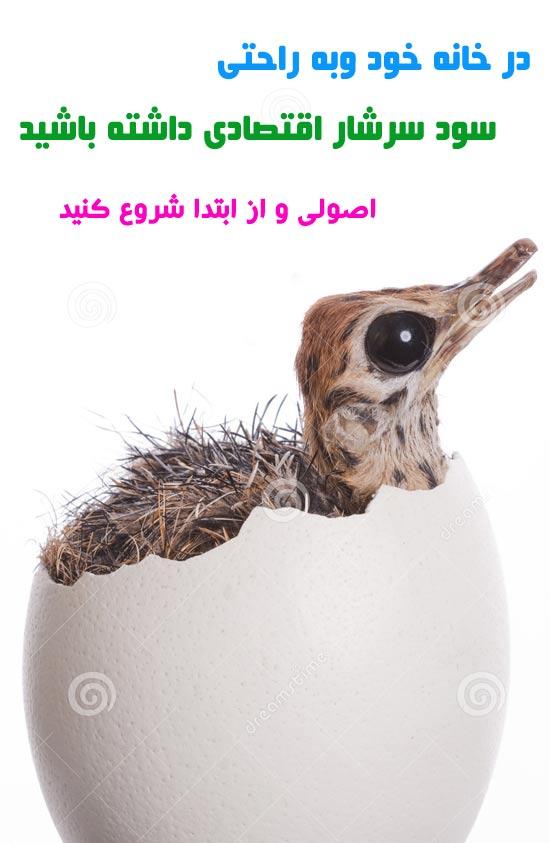 ostrich (6)