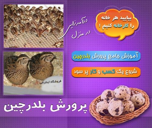 quail (4)