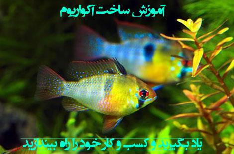 Aquarium Fish (2)