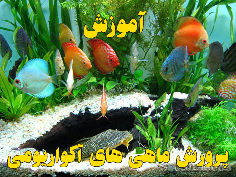 Aquarium Fish (3)