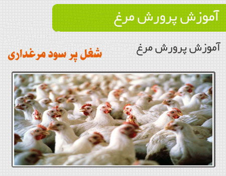 poultry (2)