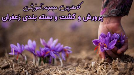 Saffran-(12)