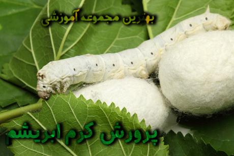 Silkworms-(9)