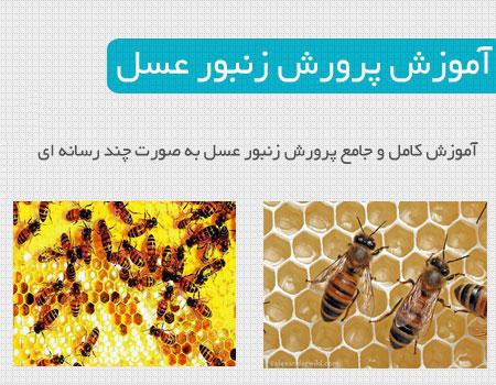 honey_bee (1)