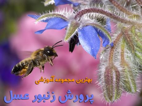honey_bee-(201)