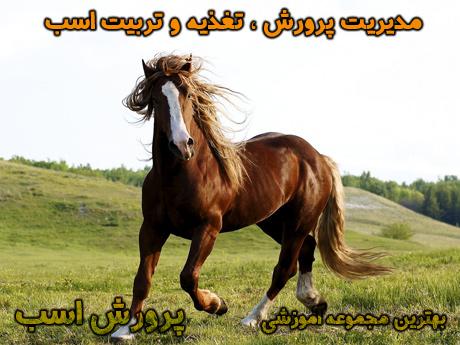 horse-(11)