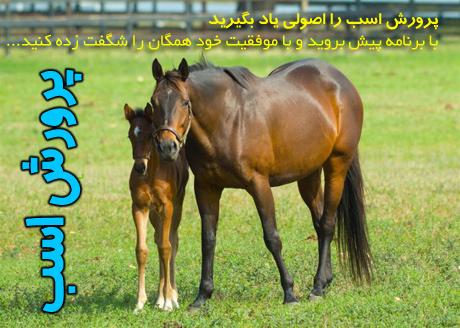horse-(12)