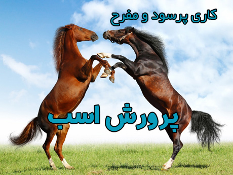 horse-(14)