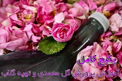 Damaskrose (4)